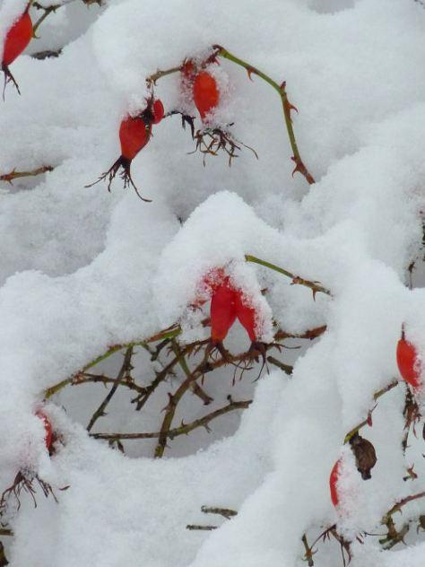 vinter141