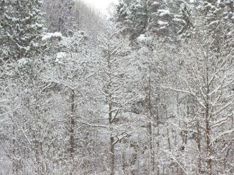 vinter146
