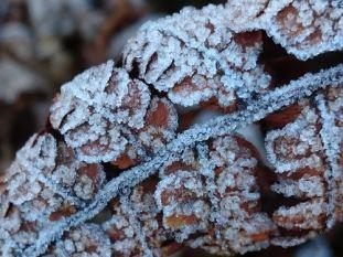 frostsukker1