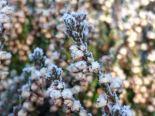frostsukker6