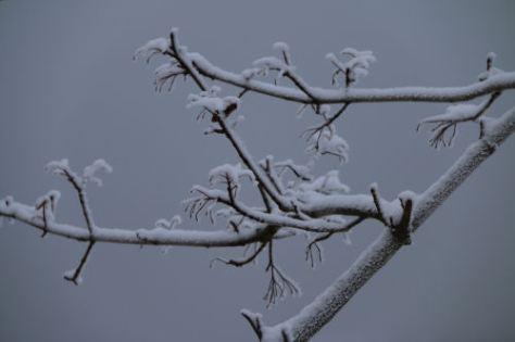 vintergra1