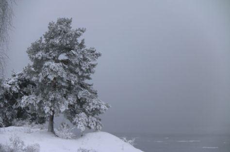 vintergra4